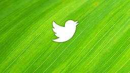Leaf twitter 16x9 PowerPoint image