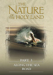 The Nature Of The Holy Land #3 - Along The Sea Road
