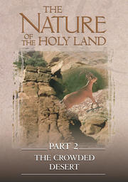 The Nature Of The Holy Land #2 - Crowded Desert