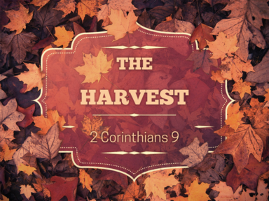 The Harvest: Part 2