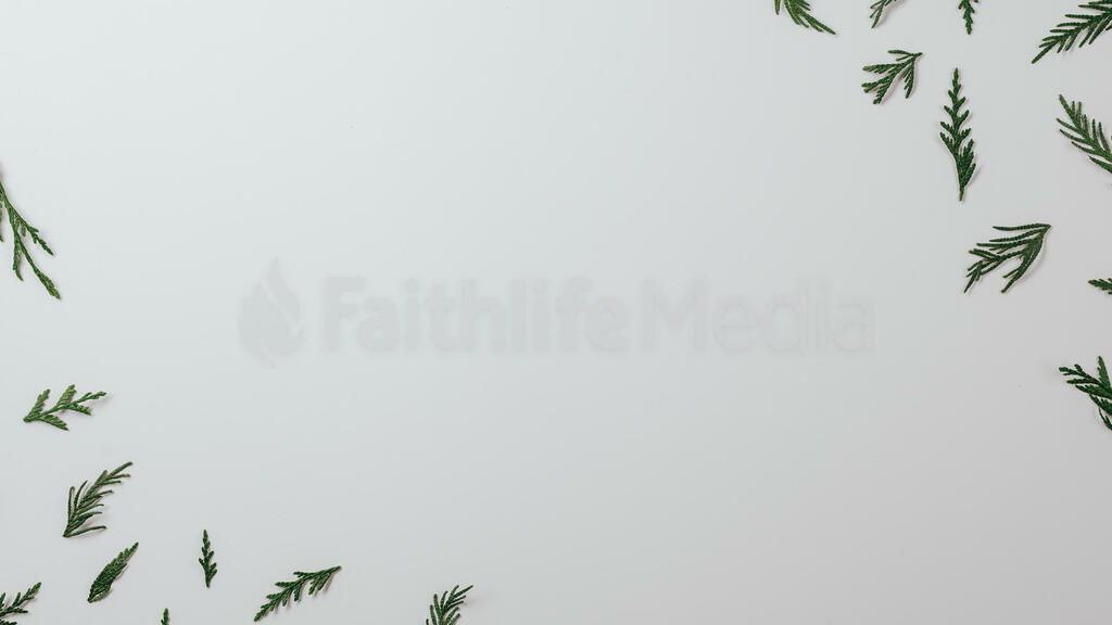 Scandinavian Christmas 2018 cedar sprigs 16x9 0d57c157 89e1 40cf 99e9 fd3a649fef58 preview