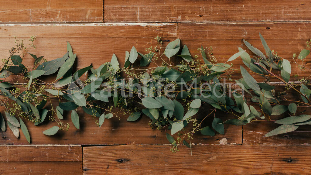 Seeded Eucalyptus large preview