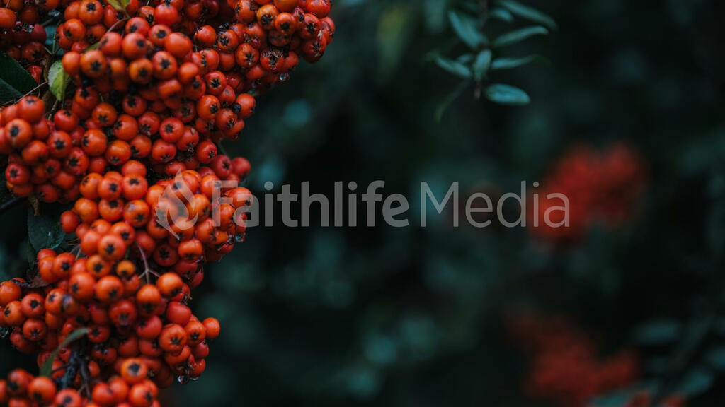 Berries large preview