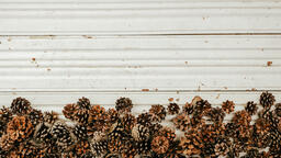 Large Pinecones  image 3