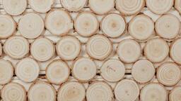 Wood Slice Ornaments  image 2