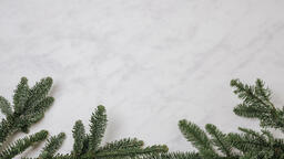 Pine Branches  image 1