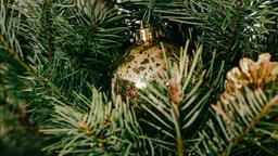 Christmas Tree Close-Up  image 4