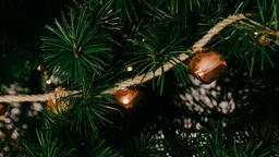 Christmas Tree Close-Up  image 6