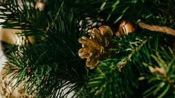 Christmas Tree Close-Up  image 8