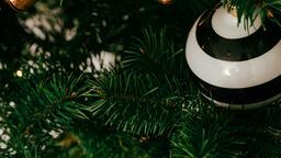 Christmas Tree Close-Up  image 5