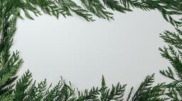 Cedar Branches  image 4