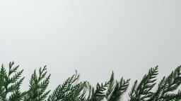 Cedar Branches  image 5
