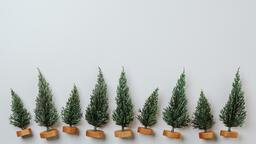 Christmas Trees  image 5