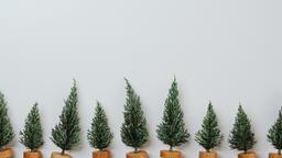 Christmas Trees  image 6
