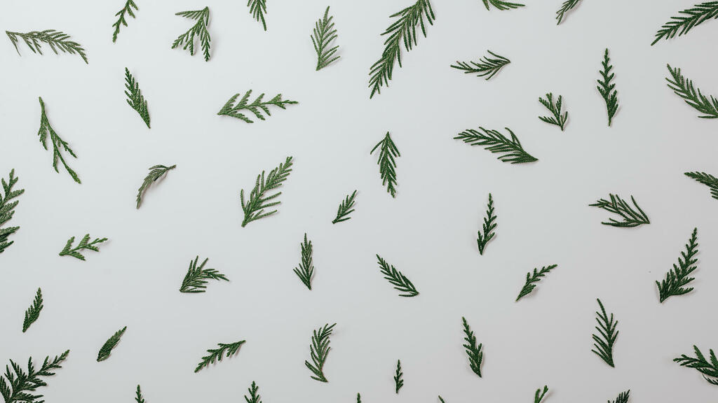 Scattered Cedar Sprigs large preview