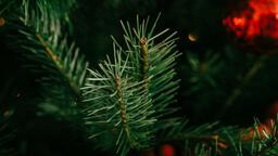 Modern Christmas 2018 tree closeup 16x9 5b78defc a3ca 4b20 8bbb acfb98134ff2 image