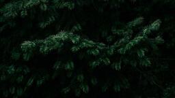 Christmas Greenery  image 4