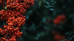 Berries  image 1