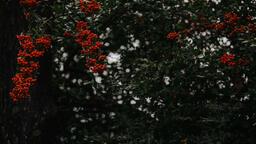 Berries  image 3