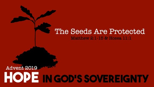 The Seeds are Protected - Hope in God's Sovereignty