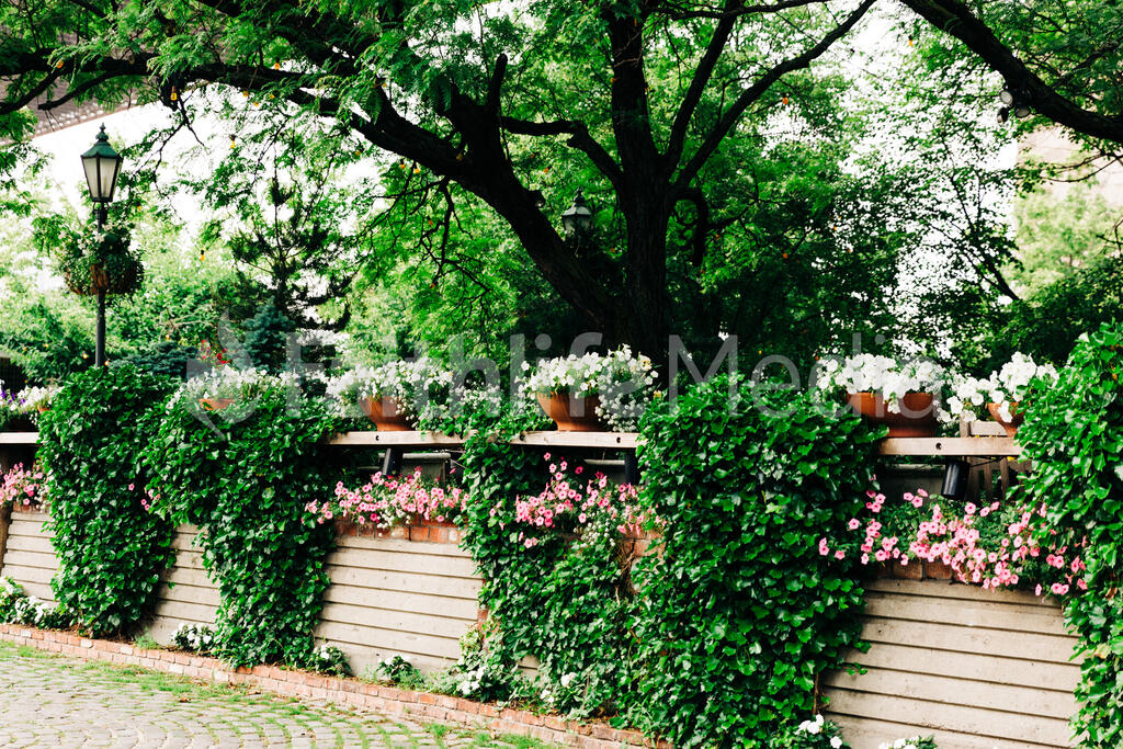 Flowers and Ivy large preview