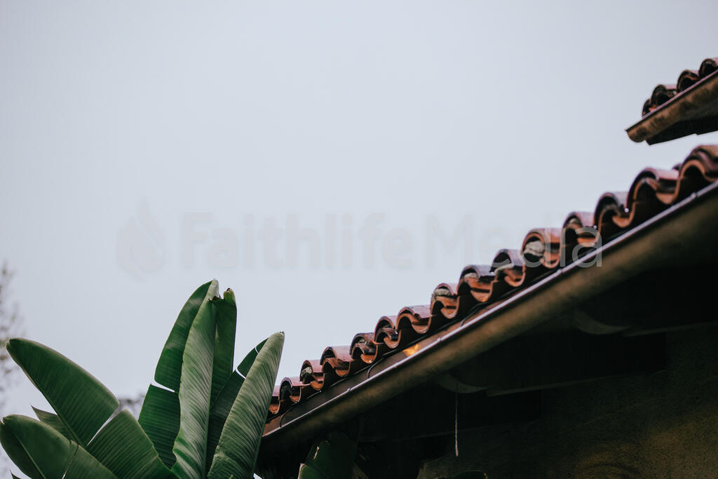 Terra Cotta Roof and Greenery large preview