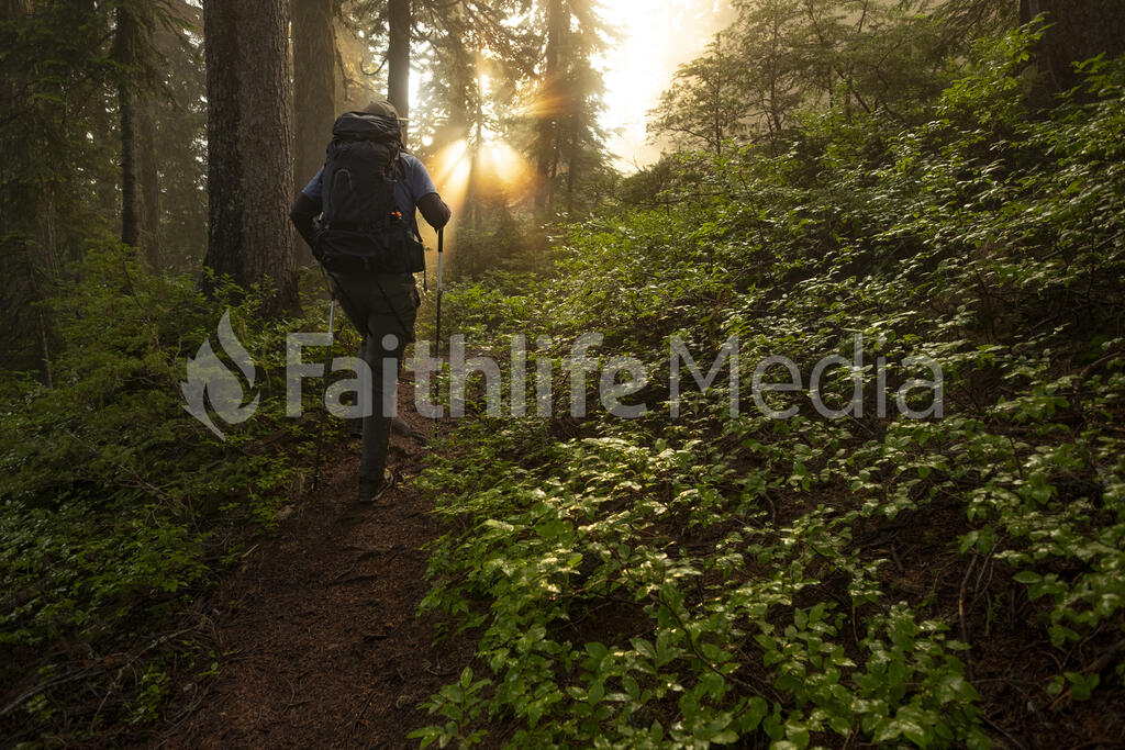 Man Hiking through Forest large preview