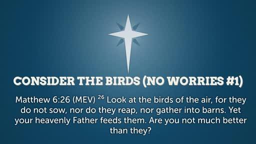Consider the Birds ( No Worries #1)