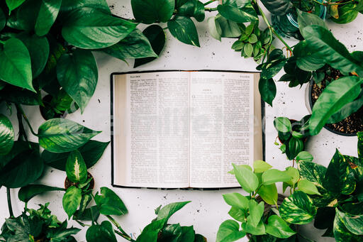 Open Bible Surrounded by Foliage