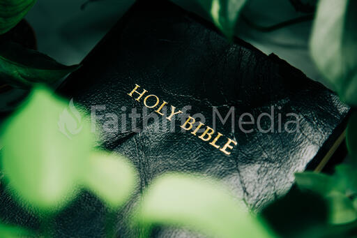 Holy Bible Surrounded by Foliage