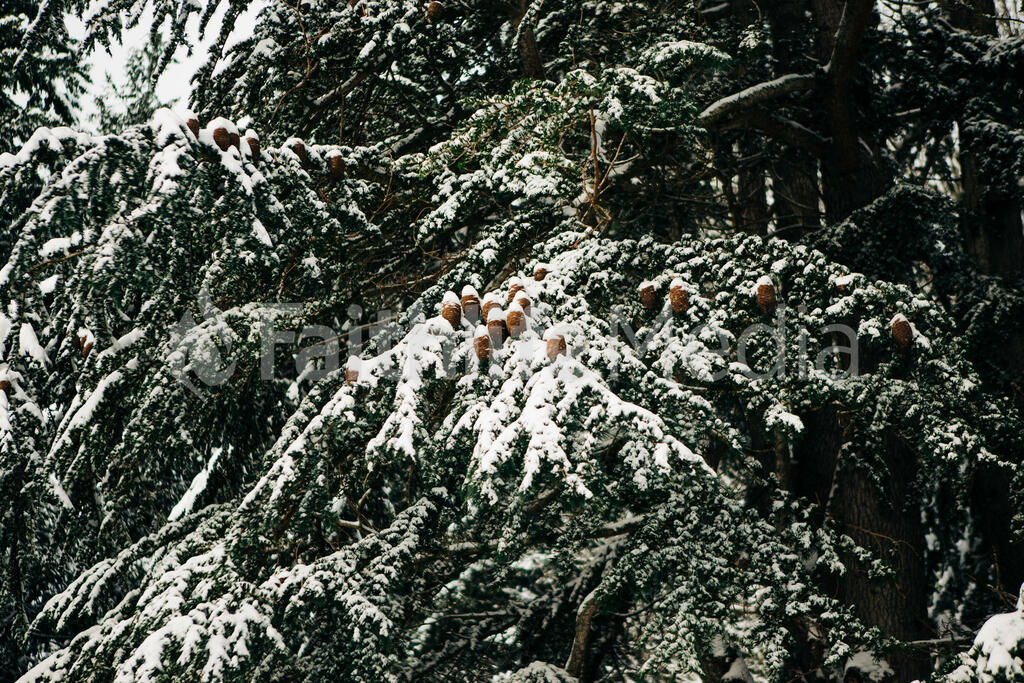 Snowy Tree Branches large preview