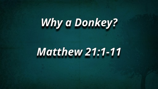 Why a Donkey?
