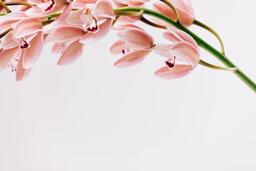 Florals 115 image