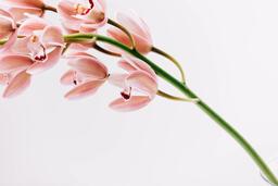 Florals 113 image