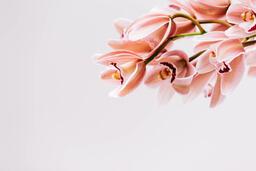 Florals 107 image