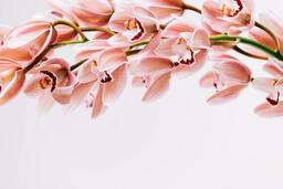 Florals 106 image