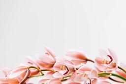 Florals 104 image