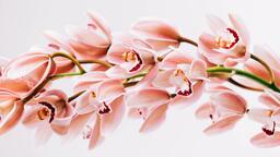 Florals 102 image