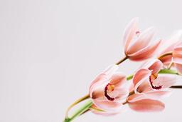 Florals 98 image