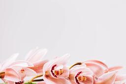 Florals 87 image
