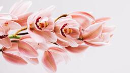 Florals 85 image