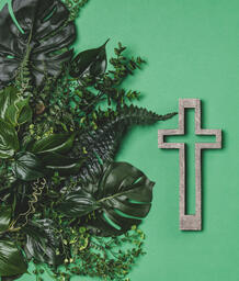 Green Foliage with a Concrete Cross Outline  image 1