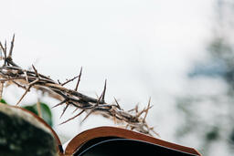 The Crown of Thorns Sitting on an Open Bible  image 4