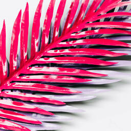 Hot Pink and Purple Palm Leaves  image 8