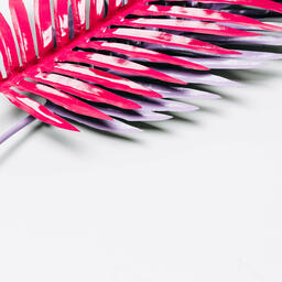 Hot Pink and Purple Palm Leaves  image 9