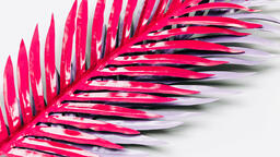 Hot Pink and Purple Palm Leaves  image 4