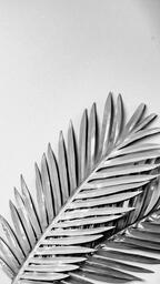 Palm Leaves  image 4