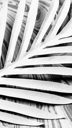 Palm Leaf on Marbled Background  image 7