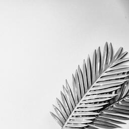 Palm Leaves  image 2
