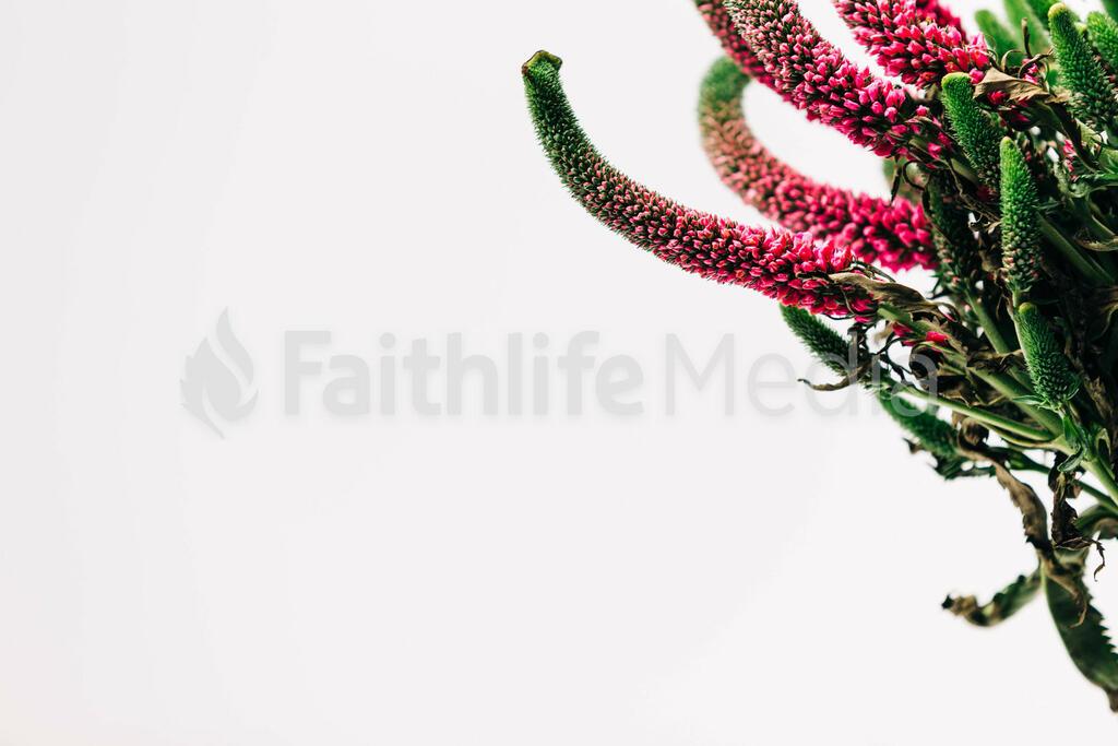 Florals 151 preview